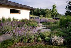 Zahrada zvlněná   Atelier Flera Landscape Design, Garden Design, Boxwood Garden, Natural Garden, Sidewalk, Country Roads, Nature, Plants, Instagram
