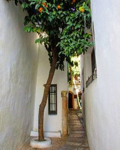 La calleja del Pañuelo, very close to the Mezquita Catedral of Córdoba, is one of the traveler's must-see destinations. The width of this Moorish-style street that starts from Plaza de la Concha, is nothing more than a lady's handkerchief. At the end, it opens in a small square, considered by some as the smallest in the world, decorated with a fountain and an aromatic orange tree. The soft murmur of the water and the smell of the orange blossom envelop the visitor in this intimate space… Blossom Trees, The Visitors, Moorish, Andalucia, Orange Blossom, Holiday Destinations, Architecture, Fountain, Spain