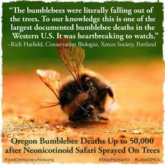 estimate of dead bees rose to the Oregon Department of Agriculture confirmed the insecticide Safari caused the deaths in a Wilsonville earlier this week. Dead Bees, Gmo Facts, Save Our Earth, Busy Bee, Save The Bees, Bees Knees, The Victim, Bee Keeping, Decir No