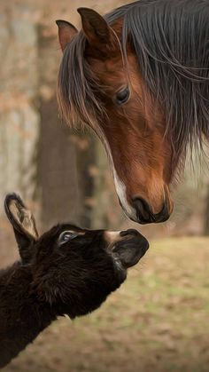 Nature & Animals Gifs Photo Videos⭐ by Agababy Juggler Farm Animals, Animals And Pets, Funny Animals, Cute Animals, All The Pretty Horses, Beautiful Horses, Animals Beautiful, Zebras, Horse Pictures