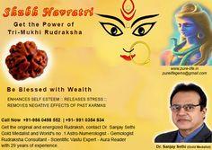 IndianStore4All THREE MUKHI RUDRAKSHA//3 MUKHI RUDRAKSHA A ONE QUALITY NEPALI 15MM