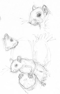 how to draw a squirrel in a tree
