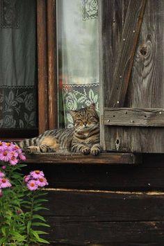 Przystanek Kłodzko :): Koci, koci łapci...