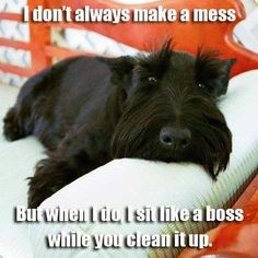 This describes my 7 sweet babies to a T.They get all of their toy,s out of their toy box and scatter them from one end of the house to the other,but won ,t put them back.They just think clean up time is play time and as I put back each toy they take it back out and run.I am the pet here not them! LOL