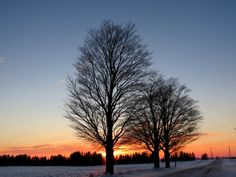 Sunset And Bare Branches - Gallery - Bonnie Sitter | pmp-art.com