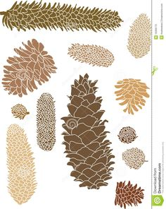 pinecone images/clipart - Dreamstime