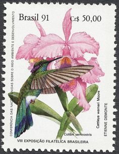 """libutron: """"White-vented Violetear and Orchid - Postage stamp from Brazil White-vented Violetear, Colibri serrirostris (Apodiformes - Trochilidae), and Cattleya warneri (Asparagales -. Old Stamps, Vintage Stamps, Vintage Birds, Postage Stamp Design, Mail Art, Stamp Collecting, Bird Art, Orchids, Illustration Art"""
