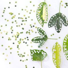 eco-friendly confetti – you just need leaves and a hole punch! eco-friendly confetti – you just need leaves and a hole punch! Green Wedding, Diy Wedding, Wedding Events, Weddings, Eco Wedding Ideas, Diy Confetti, Wedding Confetti, Confetti Ideas, Paper Confetti
