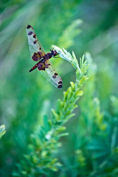 Dragonflies remind me of faithfulness