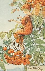 Vintage September Fairy Print, from the Flower Fairies Series, for sale by collectorsprints.com