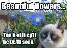 Grumpy cat frowns on your shenanigans. Grumpy cat is not impressed. I wonder if grumpy cat is an engineer. I did find some Grumpy Cat gifs: Grumpy Cat say \ Funny Grumpy Cat Memes, Funny Cats, Grumpy Kitty, Sad Kitty, Cats Humor, Kitty Kitty, Crazy Cat Lady, Crazy Cats, Angry Cat