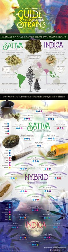 Marijuana Strains For Medical Use Infographic