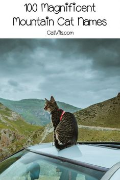 If you're looking for a cool list of mountain cat names for your new kitten, then this is the place to be! Check out 100 ideas that we adore! Unique Cat Names, Cute Cat Names, Pet Names, Girl Cat Names, Kitten Names, Cute Cats And Kittens, Cool Cats, Funny Cat Memes, Funny Cats