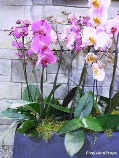 Canada Blooms 2016 - orchid display | Flower Show | Garden Show