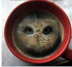 Whoooo wants coffie? I do