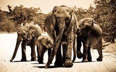 A family of elephants take over the Etosha roads. Etosha National Park © Jandre Germishuizen   Discover Namibia: www.stories.namibiatourism.com.na