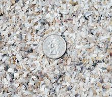 Tabby On Pinterest Oyster Shells Building Materials And
