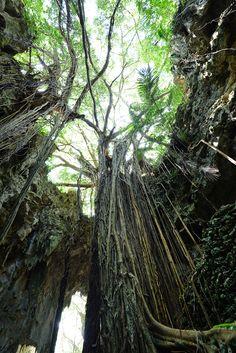 沖縄をアクティブに楽しもう!ちょっとハードな沖縄の自然体験 4選