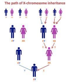 DNA and Family Tree Research: Step 3.2 - a match on the X?
