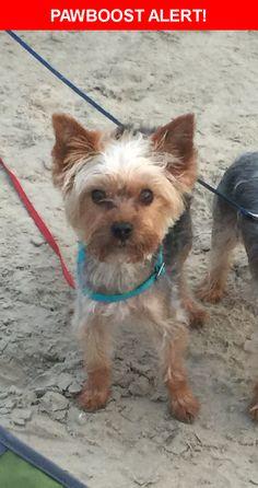 Please spread the word! Nikko was last seen in La Vernia, TX 78121.    Nearest Address: Near Deer Ridge Dr & Bear Ridge Dr
