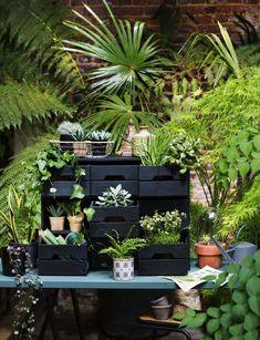 Customiser un meuble d'herboriste avec des plantes - Marie Claire Indoor, Style Urban, Flowers, Green, Plants, Potting Benches, Home, Inktober, Gardens
