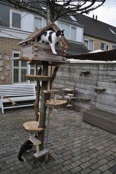 Krabpaal voor de tuin (branch cats)