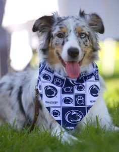 Penn State Nittany Lions Handmade Dog Scarf by cindyloudogscarves
