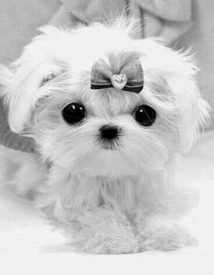 puppy ♡