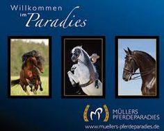 pferdeparadies müllers - Google-Suche