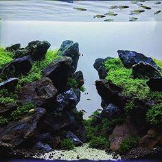 Bildergebnis für aquascaping
