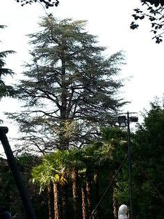 Trees with Laboratori Creativi Beretta @ Italia Multimedia