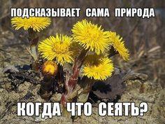 КОГДА ЧТО СЕЯТЬ? ПОДСКАЗЫВАЕТ САМА ПРИРОДА. Обсуждение на LiveInternet - Российский Сервис Онлайн-Дневников