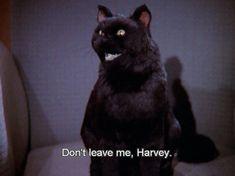 Don't leave me, Harvey. Meme Gifs, Memes, Salem Sabrina, Salem Cat, Salem Saberhagen, Retro Quotes, American Shorthair Cat, Words Wallpaper, Dont Leave Me