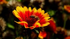 Deutlich mehr sonnige Abschnitte, ... als in den letzten Tagen, bringt auch heute die Bienen und Humeln im Garten wieder zum fliegen. Und wir können die Heizungen wieder abdrehen. :-)