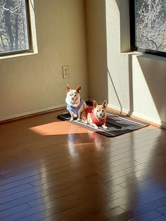Peter Piper, Chihuahuas, Chihuahua Dogs, Chihuahua