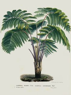 Stunning exotic botanical from Louis van Houtte's, Flore des Serres et des Jardins de l'Europe (Flowers of the Greenhouses an Illustration Botanique, Plant Illustration, Botanical Illustration, Vintage Botanical Prints, Botanical Drawings, Antique Prints, Botanical Flowers, Botanical Art, Impressions Botaniques