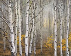 """Aspen in Fog, Boulder Mountain was made on a trip I took in 2003 with photographer Joseph Holmes, in pursuit of the wily aspen grove! We spent most of the time in Colorado's San Juan Mountains, but drove back through Utah. Boulder Mountain in near Capitol Reef National Park, on Utah's beautiful Highway 12. The mountain is big (over 11,000 feet!) and is just covered with aspen. We were there around October 5th, past prime for the aspen color, as most of the leaves were already on the ground…"