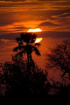 Palm Tree Sunset by David Hobcote