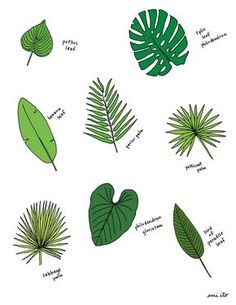 Palm Leaves Living in Miami has opened my eyes to all of the beautiful different types of palms and other tropical plants that exist. Here's a sampling of just a few, that I turned into a print available here! Bullet Journal Leaves, Bullet Journal 2019, Bullet Journal Themes, Bullet Journal Inspiration, Journal Ideas, Tropical Leaves, Tropical Plants, Tropical Garden, Leaves Doodle
