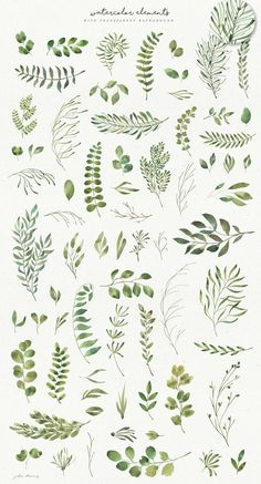 Leafy Leaf Collection by Julia Dreams on Creative Market flowers, florals and t. Botanical Art, Botanical Illustration, Watercolor Illustration, Botanical Wedding, Watercolor Leaves, Floral Watercolor, Watercolor Paintings, Watercolor Pattern, Watercolor Logo