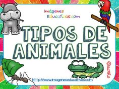 Tipos de animales claseficación (1) Animal Classification, Animal Science, Birthday Background, Colouring Pics, Types Of Animals, Pre Writing, Elementary Education, Kids Learning, Spanish
