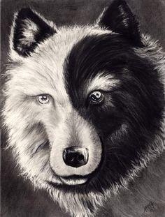 yin-yang wolf