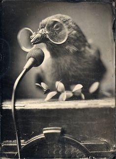 Bird wearing glasses giving a speech