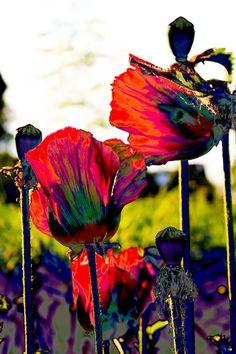 bunte Sommerblumen, noch etwas bunter