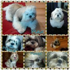 Dogs Pets, Animals, Animals And Pets, Animales, Animaux, Animal, Animais