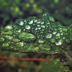 sok jó esőcsepp kis helyen is elfér :D