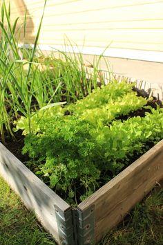 kasvimaa,kasvilaatikko,piha,yrtit Summertime, Veggies, Herbs, Interior Design, Plants, Image, Nest Design, Vegetable Recipes, Home Interior Design