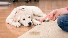 Quem tem animal em casa sabe que é difícil deixar a casa sempre perfumada. Veja dicas que vão te ajudar a eliminar o cheiro do seu bichinho.