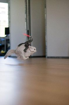 Uh-Huh: Darth Vader Riding A Cat Into Battle... May the Fierce be with you :P