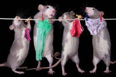 Věšet prádlo se musí :)